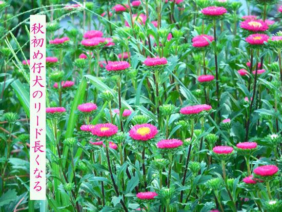 akihajime20190826.jpg