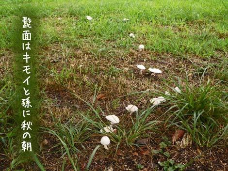 akinoasa20180902.jpg