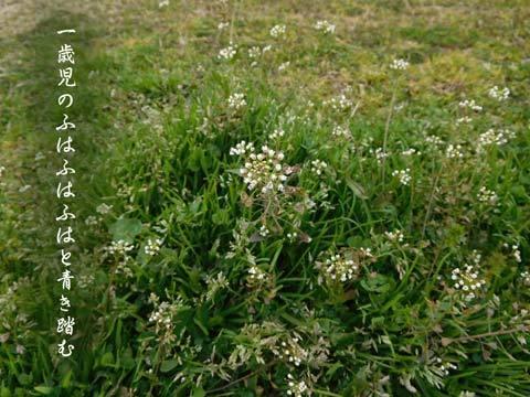 aokihumu20190324.jpg
