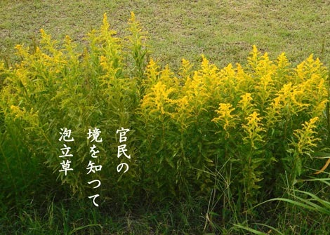 awadatisou20181013.jpg