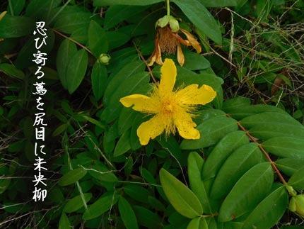 byouyanagi4423-(14).jpg