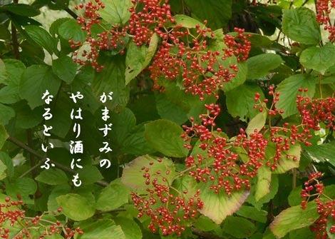 gamazumi20180929.jpg