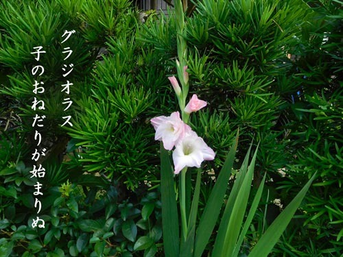 gurajiorasu20190622.jpg