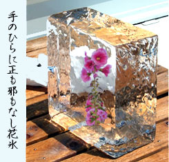 hanagoori20170706.jpg