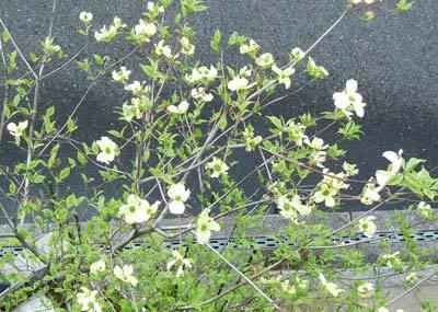 hanamizuki3375.jpg