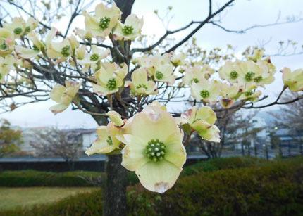 hanamizuki8285.jpg