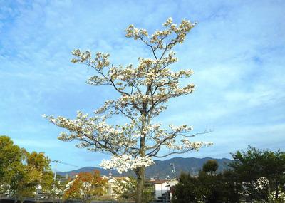 hanamizuki8407.jpg