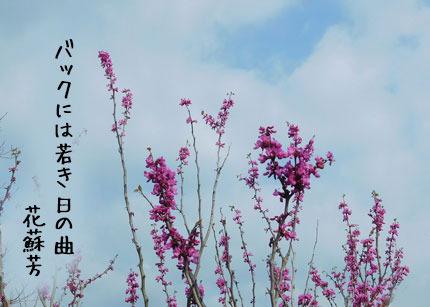 hanazuou3168.jpg