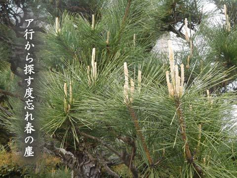 harunotiri20190411.jpg