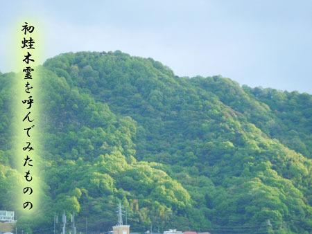 hatugaeru20180428.jpg