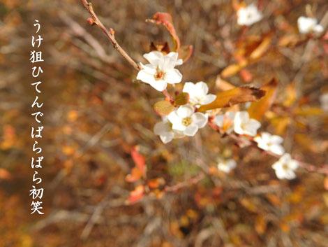 hatuwarai20190109.jpg