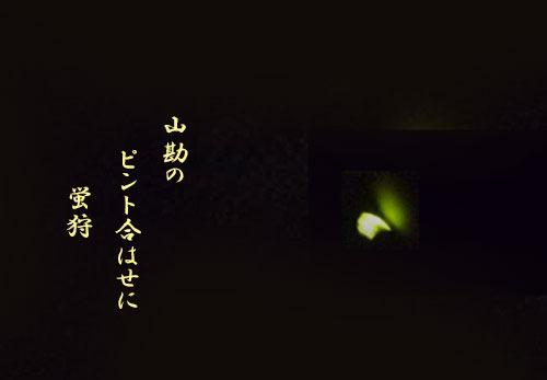 hotaru20190701.jpg