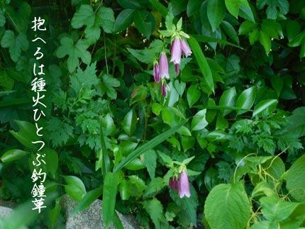 hotarubukuro4507.jpg