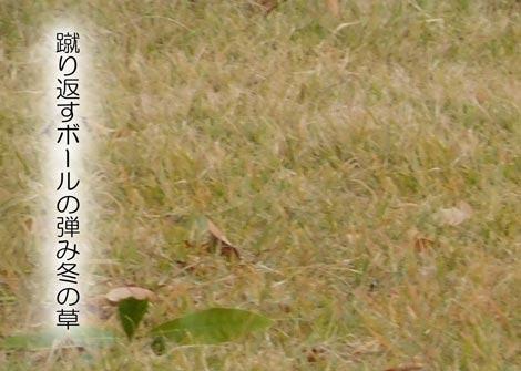 huyukusa20181204.jpg