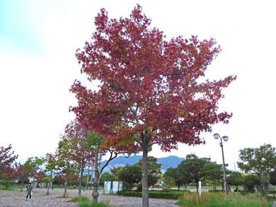 kouyou20161026.jpg