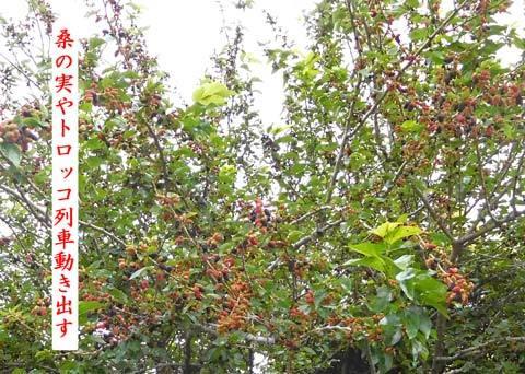 kuwanomi20190604.jpg