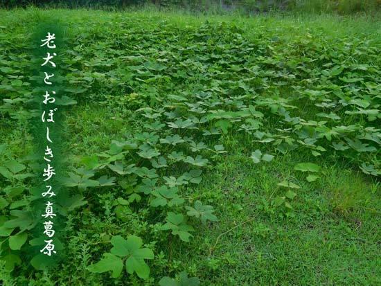 kuzu20190904.jpg