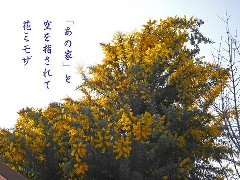 mimoza20190328.jpg