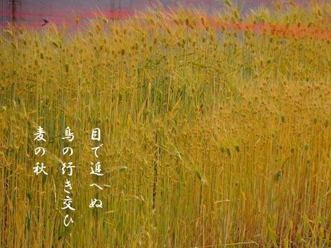 muginoaki20190521.jpg