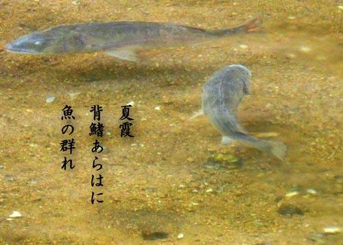 natugasumi20190620.jpg