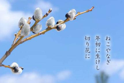 nekoyanagi20180213.jpg