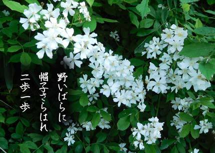 noibara4179-2.jpg