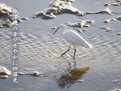 sankansion20190123.jpg