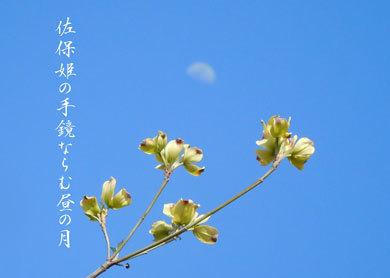 saohimeDSCN1403.jpg