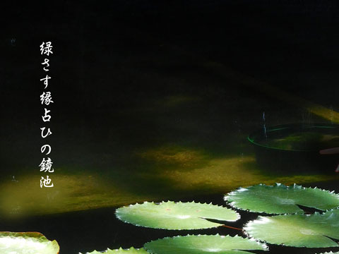 sinnryoku20190503.jpg