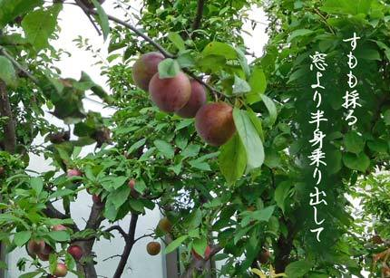 sumomo20170626.jpg