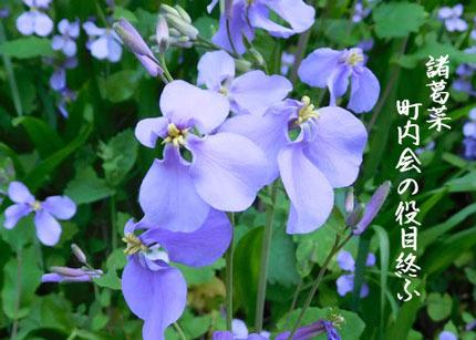 syokatusai3129.jpg
