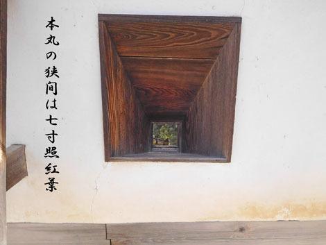 terumomiji20181101.jpg