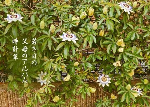 tokeisou20190609.jpg