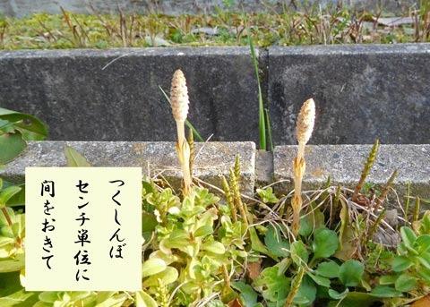 tukushi20190316.jpg