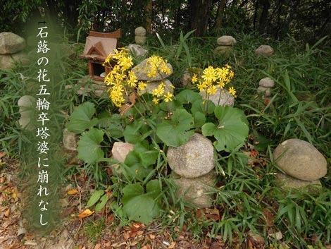 tuwabuki20181027.jpg