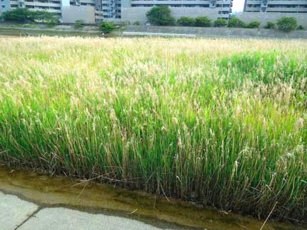 yoshi9004.jpg